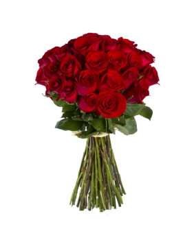 flower-rose-red